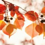 中国語で知る季節の養生法・・・秋の養生