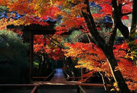 秋ブログ01 (480x328)