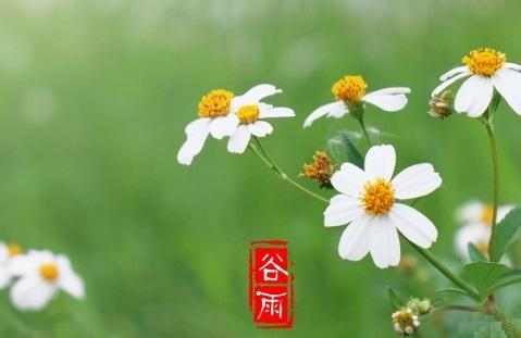 谷雨01 (480x313)